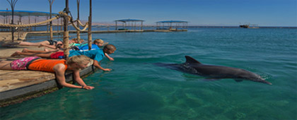 Dolphin Reef – Photo by Dafna Tal IMOT